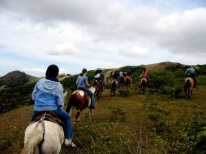 Costa Rica Internship summer_Location_Horse