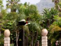 Location Gran Canaria_Internship